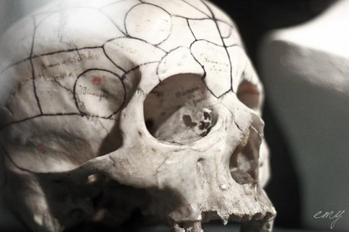 lyon_sur_crime_part_1_musee_testut_latarjet_24_octobre_2014_by_emy_chaoschildren-27
