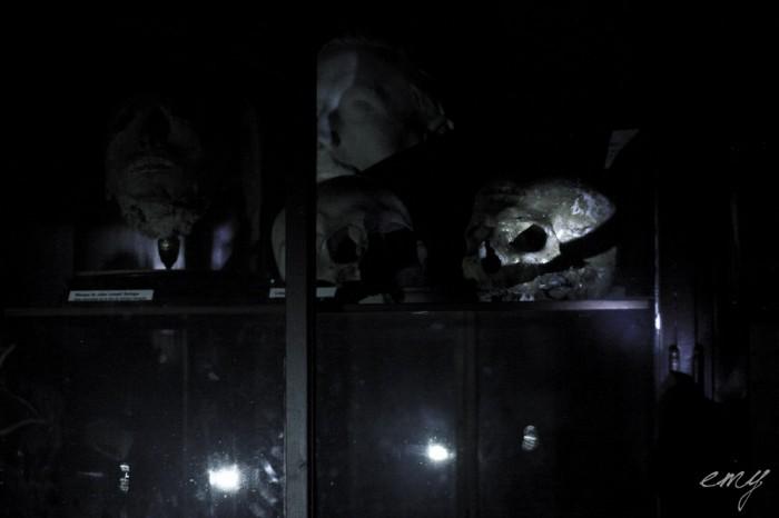 lyon_sur_crime_part_1_musee_testut_latarjet_24_octobre_2014_by_emy_chaoschildren-50