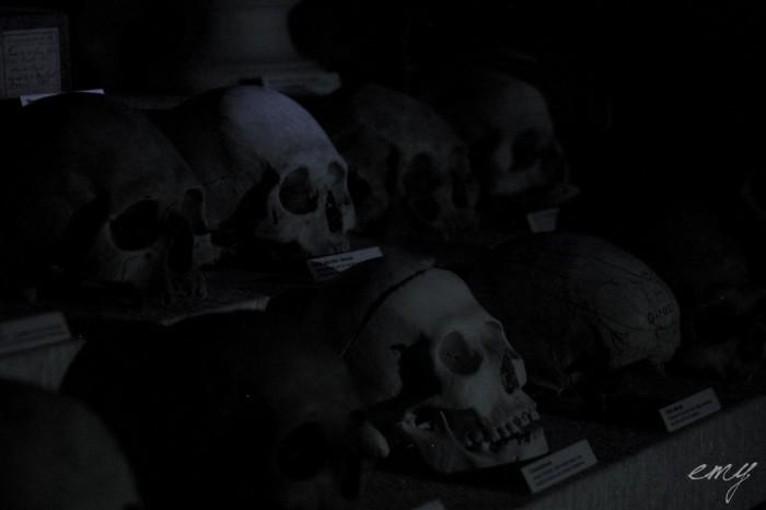 lyon_sur_crime_part_1_musee_testut_latarjet_24_octobre_2014_by_emy_chaoschildren-53