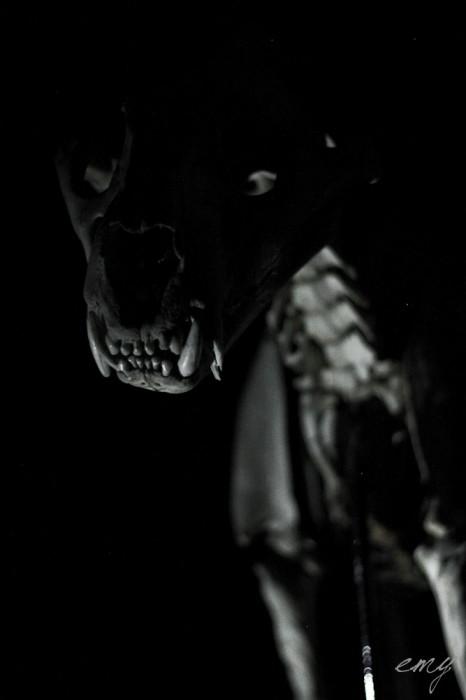 lyon_sur_crime_part_1_musee_testut_latarjet_24_octobre_2014_by_emy_chaoschildren-55